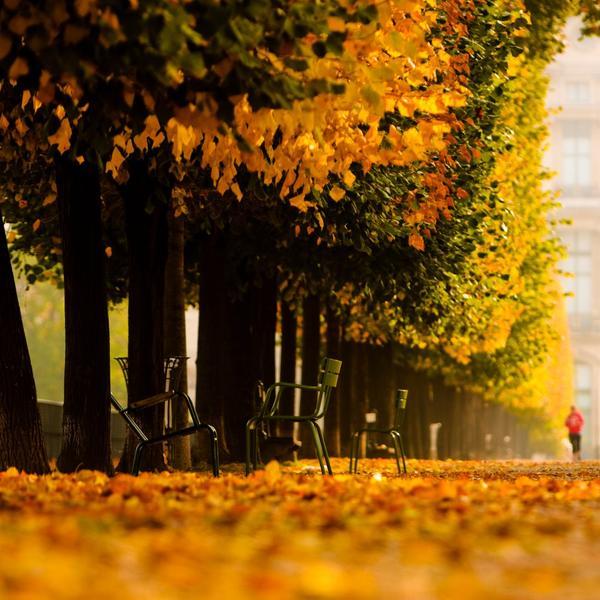 Automne Paris Tuileries changement climatique