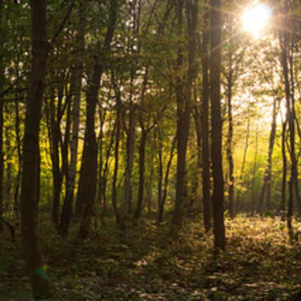 Forêt Ile-de-France