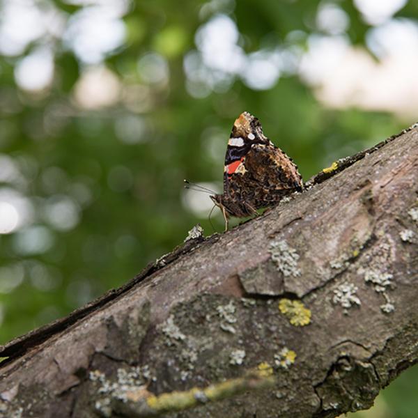 Papillon dans l'arboretum (bois de Vincennes)