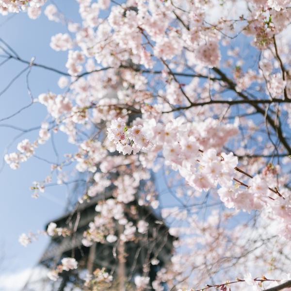 8 éco-gestes à mettre en place au printemps !