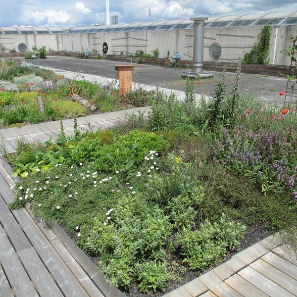 Végétalisation de toiture © Le Prieuré
