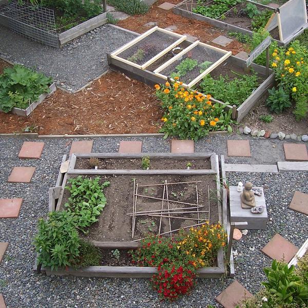 agriculture urbaine