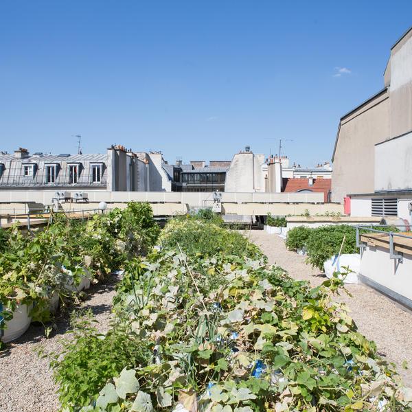 agriculture urbaine sur toit de Paris