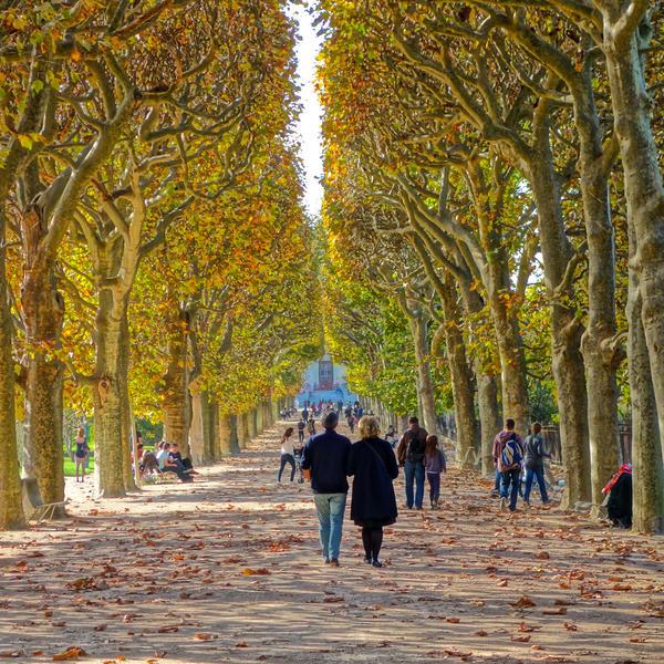 Jardin des plantes en automne