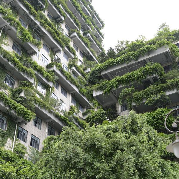 Une façade végétalisée