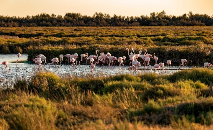 Photo de flamants rose en Camargue